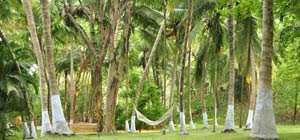 ayurvedic retreat center kerala