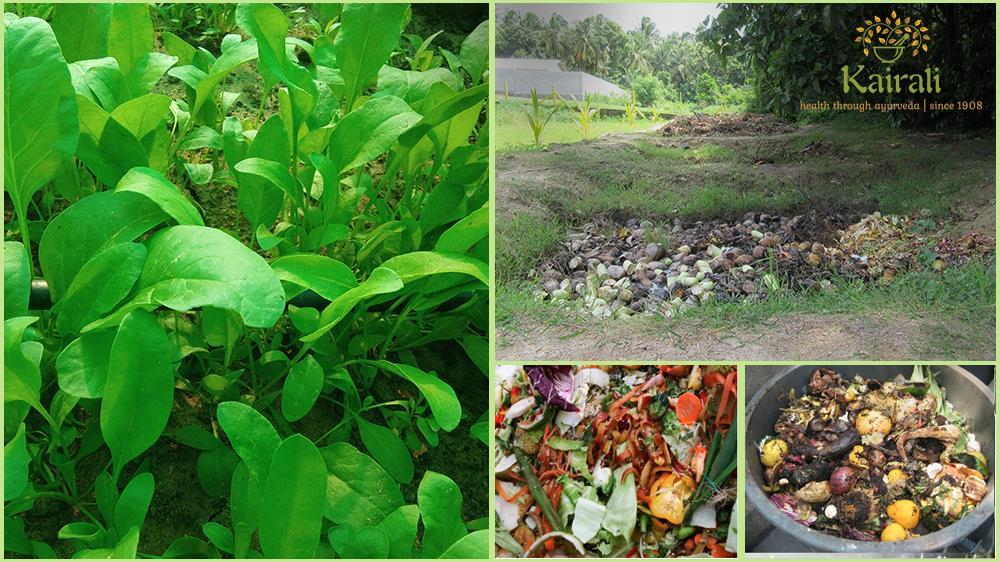 vermiculturecultivationandorganicfarmingbykairali